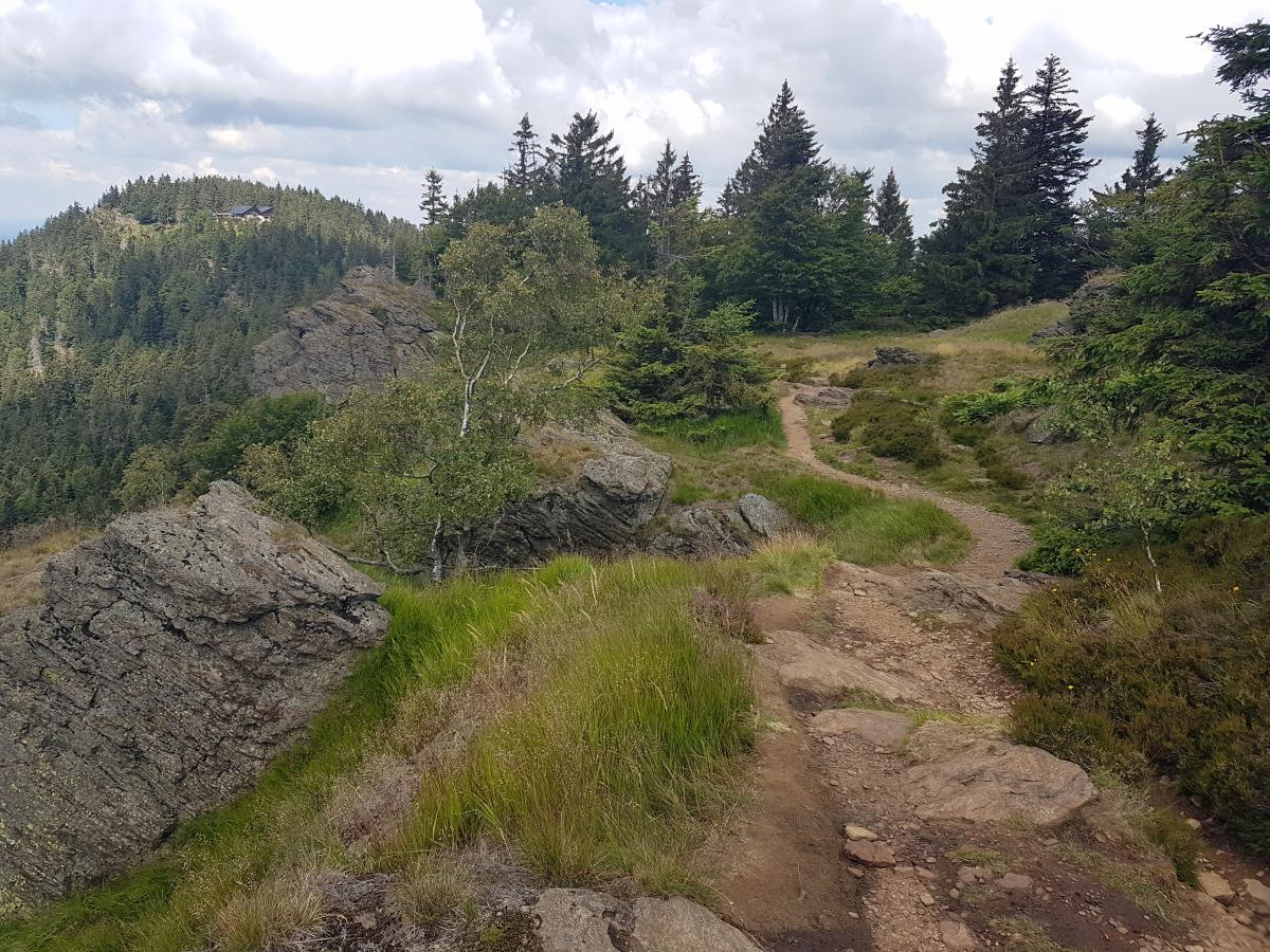 Kaitersberg Trail